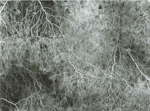Efrat Shvily 100 Years, 2012, Archival pigment print on baryt paper