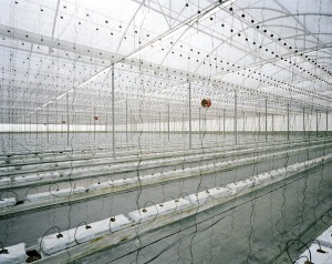 Greenhouse, El Ejido, Spain, 2013 | © Armin Linke